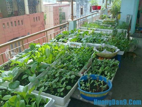 Hướng dẫn cách trồng rau sạch tại nhà đảm bảo