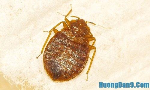 Mẹo diệt côn trùng trong nhà hiệu quả nhất
