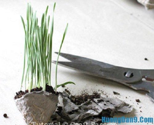 Sáng tạo với cách trồng cây trong vỏ trứng