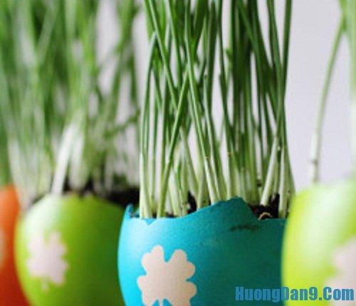 Thành phẩm sau khi thực hiện cách trồng cây trong vỏ trứng