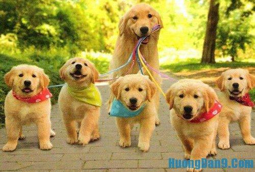 Hướng dẫn chăm sóc chó trước và sau khi sinh