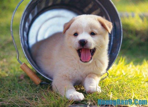 Hướng dẫn huấn luyện chó cơ bản