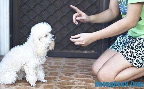 Dạy cách huấn luyện thú cưng nhà bạn