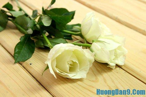Hướng dẫn trồng hoa hồng xanh cơ bản