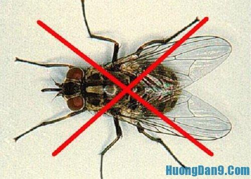 Hướng dẫn cách làm bẫy ruồi đơn giản mà hiệu quả