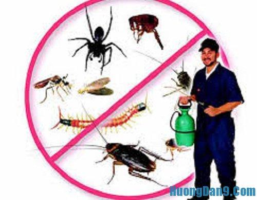 Hướng dẫn cách diệt côn trùng trong nhà hiệu quả