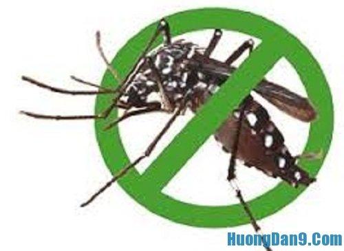 Hướng dẫn cách diệt côn trùng trong nhà đơn giản
